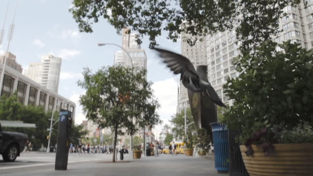pigeon flying in new york city on a summer afternoon - slow motion - 一隻動物 個影片檔及 b 捲影像
