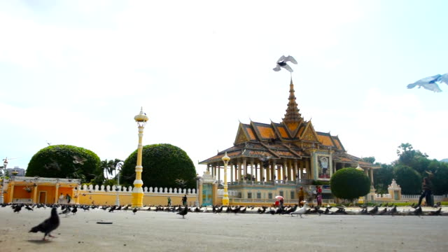 Pigeon in front of Royal Palace in Cambodia