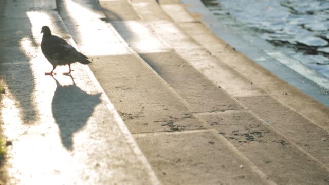 vidéos et rushes de pigeon à paris - pont de bir hakeim