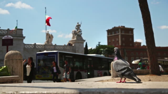 pigeon in piazza venezia  in rome - altare della patria stock videos and b-roll footage