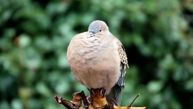 pigeon in the rain - plusphoto stock videos & royalty-free footage