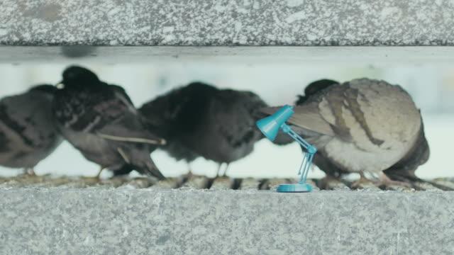 Tauben und Leselampe