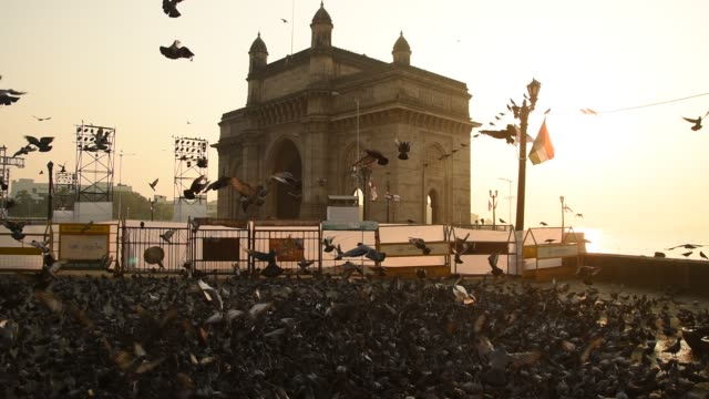 pigeons at gateway of india, in morning, colaba, mumbai, india. - mumbai stock videos & royalty-free footage