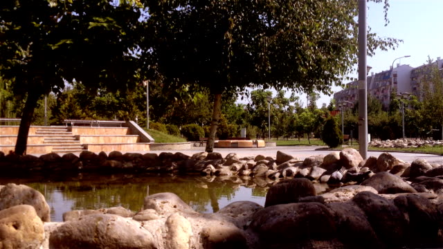 pigeons drink water in a park pond - skopje stock videos and b-roll footage
