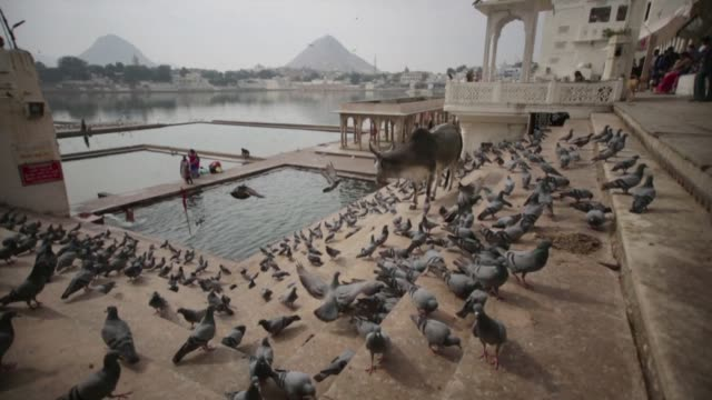 Pigeons flutter around temple ghats by Pushkar Lake