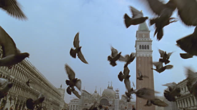 SLO MO LA WS TU Pigeons flying in square near Doges Palace, St. Mark's Basilica, and Campanile / Venice, Italy