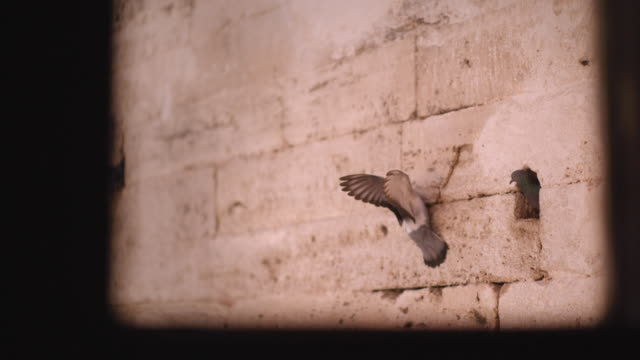 pigeons flying near hagia sophia mosque in istanbul, turkey - middle east stock videos & royalty-free footage