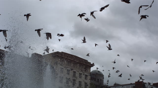 ms slo mo pan pigeons flying over city center fountain / united kingdom - fontän bildbanksvideor och videomaterial från bakom kulisserna