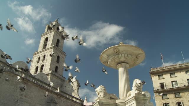 slo mo ws la pigeons flying over fountain in plaza de san francisco / havana, cuba - klocktorn bildbanksvideor och videomaterial från bakom kulisserna