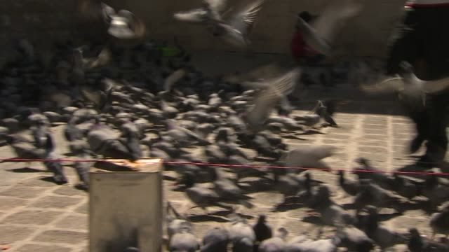 Pigeons flying up into air at Temple of Jupiter ruins in Damascus Syria
