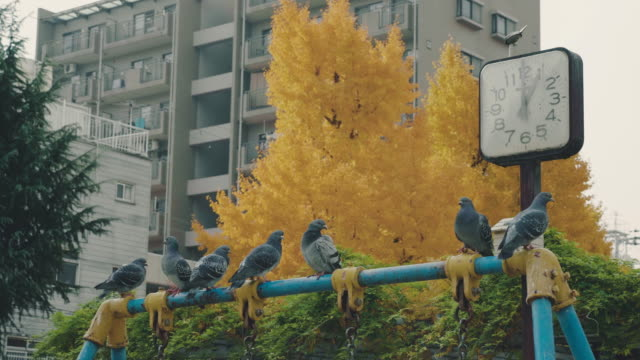 Pigeons in autumn park.