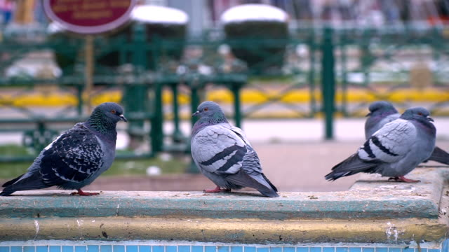 pigeons in city - cartoon p stock videos & royalty-free footage