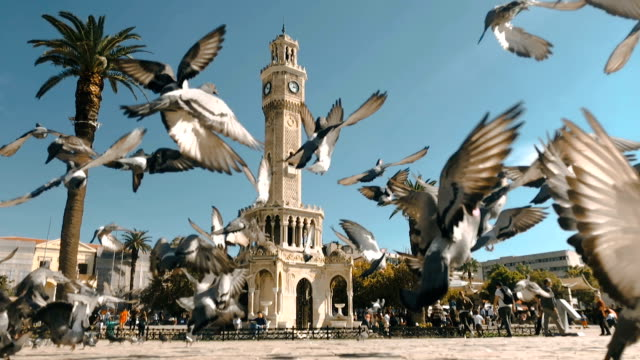 pigeons in konak square around clock tower of izmir - courtyard stock videos & royalty-free footage