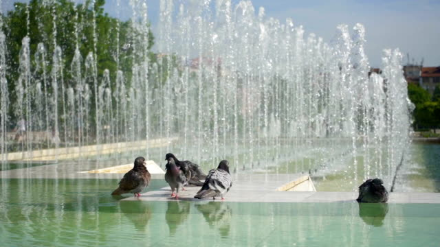 pigeons in the city - fountain stock videos & royalty-free footage