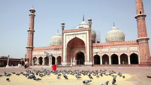 LS Pigeons in the courtyard of the Jama Masjid, a Muslim mosque / Delhi, Punjab, India