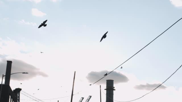 vídeos de stock e filmes b-roll de pigeons in the streets of new york city - grafite produto artístico