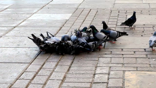 pigeons in town square - courtyard stock videos & royalty-free footage