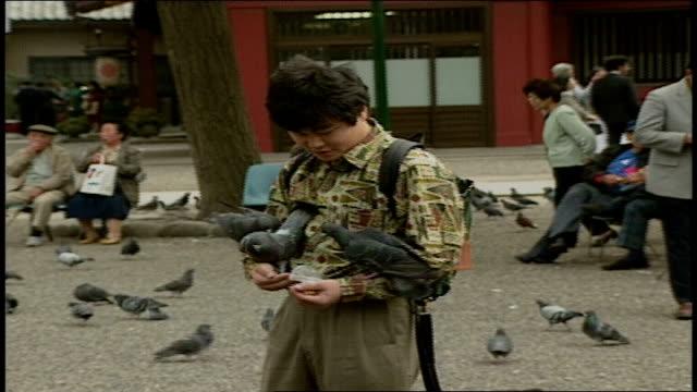 pigeons landing on man feeding them in asakusa kannon temple japan - shitamachi stock videos and b-roll footage