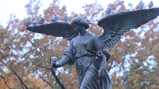 pigeons line the wings of a statue of an angel in new york city's central park. - ängel bildbanksvideor och videomaterial från bakom kulisserna