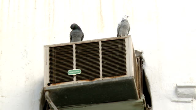 LA Pigeons on air-conditioning unit, Muscat, Oman