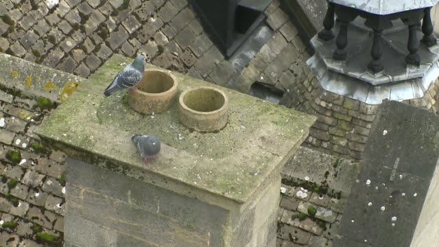 pigeons on roof - moss stock videos & royalty-free footage