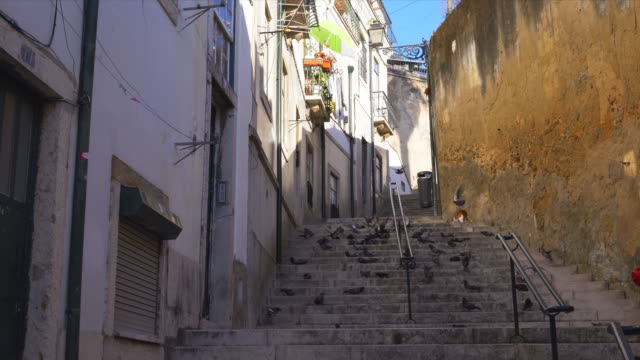 pigeons on small stairway in lisbons old town alfama. - old town stock videos & royalty-free footage