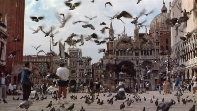 cu, tu, ms pigeons on st. mark's square, venice, italy - venice italy stock videos & royalty-free footage