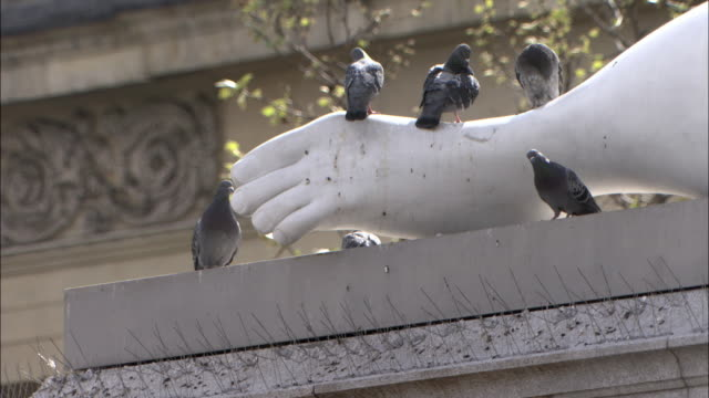 Pigeons on statue in Trafalgar Square, London, UK