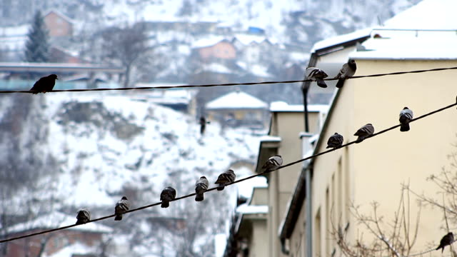 pigeons on telephone wire with snow covered houses in the backround. - wire stock videos & royalty-free footage