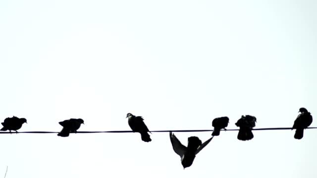 stockvideo's en b-roll-footage met duiven op de telefoon draden - stock video - kabel