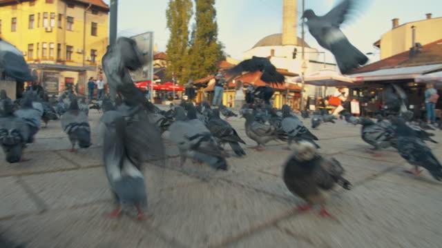 vídeos y material grabado en eventos de stock de ms pigeons en la plaza de sarajevo - medium group of animals