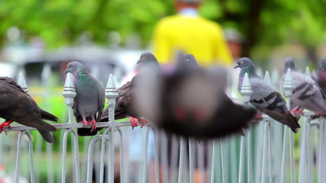 pigeons on the steel rail - crumb stock videos and b-roll footage