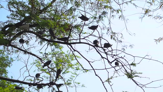 pigeons on the tree - flock of birds stock videos and b-roll footage