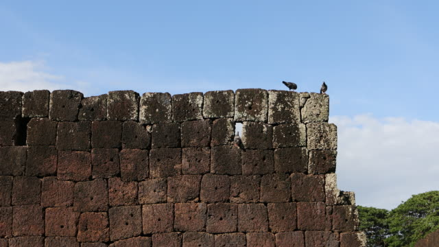 pigeons on wall - yeni cami mosque stock videos & royalty-free footage