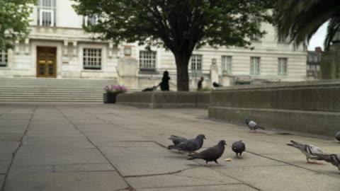 pigeons peck at bread - hackney 個影片檔及 b 捲影像