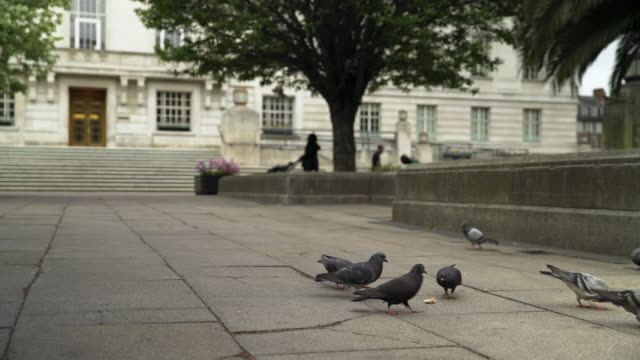 pigeons peck at bread - hackney stock videos & royalty-free footage