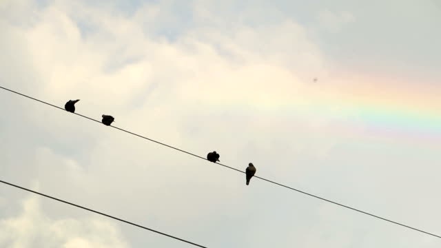 Pigeons perched on a power line between beautiful sky.