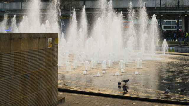 pigeons play in the water of a fountain in piccadilly gardens, manchester - fountain stock videos and b-roll footage