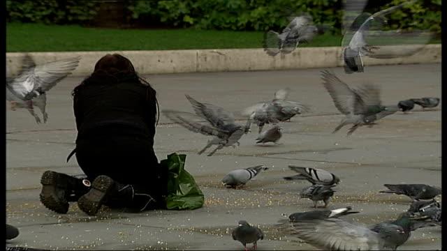 stockvideo's en b-roll-footage met pigeons, seagulls and people feeding birds in trafalgar square; people walking amongst pigeons / woman feeding pigeons / flock of pigeons landing and... - omgeven