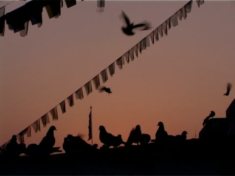 Pigeons settle on the Boudhnath Stupa