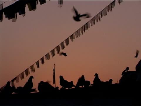 Tauben machen Sie es sich auf dem Boudhnath Stupa