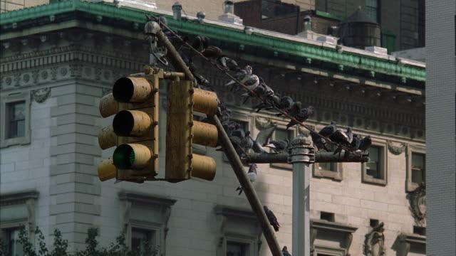 WS Pigeons Sitting On Post Overlooking Traffic Light / Manhattan, New York, USA