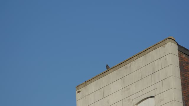 pigeons take flight on december 11, 2020 in baltimore, md. maryland reported its second-highest daily total ever for new coronavirus cases 2 weeks... - blue stock videos & royalty-free footage