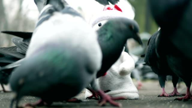 Tauben machen den Schneemann, witzig humor