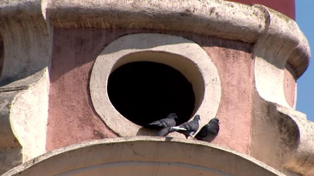 stockvideo's en b-roll-footage met pigeons(hd25p) - west europa