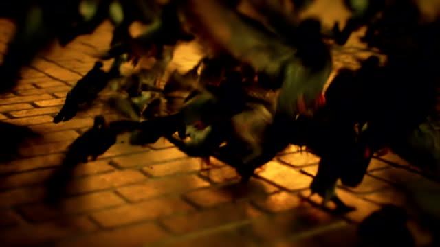ハト - 小さめのハト点の映像素材/bロール