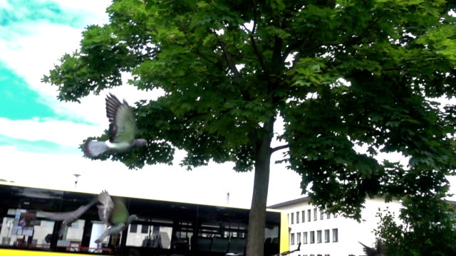 pigeons - wurzburg stock videos and b-roll footage