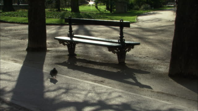 pigeons walk around the base of a park bench in paris. - park bench stock videos & royalty-free footage