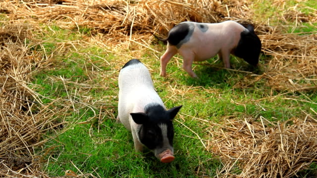 vídeos y material grabado en eventos de stock de hucha - nariz de animal
