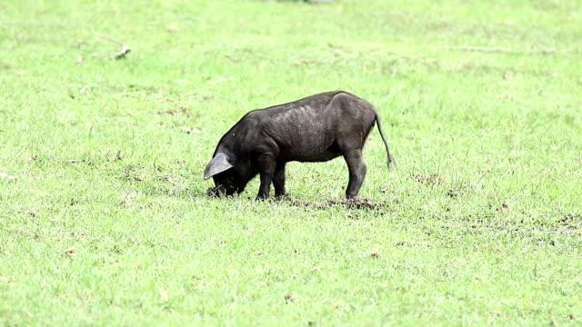 vídeos y material grabado en eventos de stock de cochinillos - nariz de animal